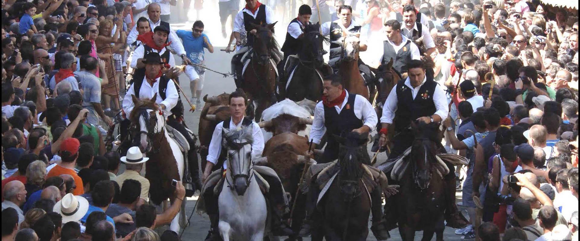 Toros y caballos de Segorbe