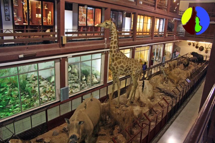 El Museo de Ciencias Naturales de Onda, un recorrido por la naturaleza del mundo