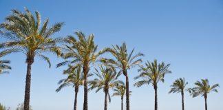 Playa de Castellón