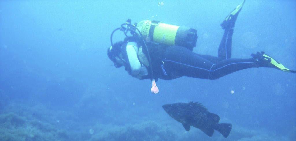 Buceo en Columbretes desde Alcocebre