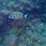Buceo Alcocebre