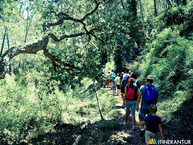 Rutas escolares itinerantur Castellon