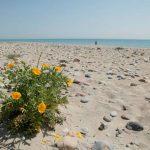 Playa De Pedra Rotja moncofa
