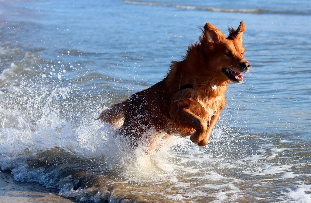 Playas para perros en Castellón 2018