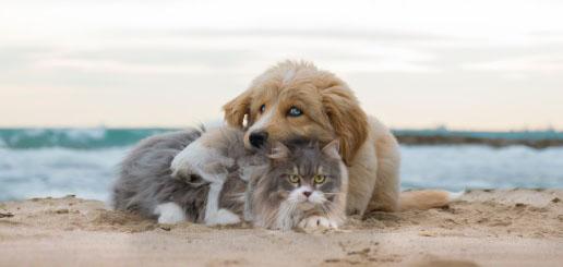 Benicàssim acogerá su primer festival de adopción canina el 8 de abril