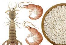 Jornadas de la Galera, el langostino y el arroz de Peñíscola