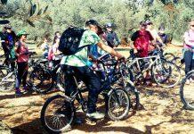 Ruta cicloturista olivos milenarios del Maestrazgo